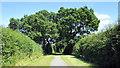 SJ4568 : The Longster Trail by Jeff Buck