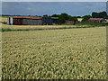 TL3291 : Toll Farm near Benwick by Richard Humphrey