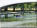 SU9875 : Rowers on the Thames under Albert Bridge by David Dixon