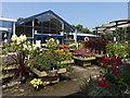 SJ3861 : Plants for sale (2) by Richard Hoare