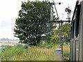 SU6232 : Watercress Line, Signals near Ropley by David Dixon