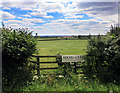 SP6707 : Fields at New Village Farm by Des Blenkinsopp