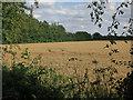 TL3067 : Field by Hilton Road by Hugh Venables