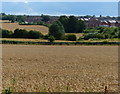 SK6307 : Farmland on the edge of Hamilton by Mat Fascione