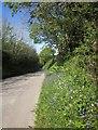 SX3170 : Lane to Golberdon by Derek Harper