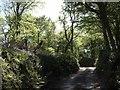 SX3169 : Lane in Bicton Wood by Derek Harper