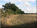 TL4160 : Washpit Brook, Cambridge University Farm by Hugh Venables