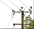 J4581 : Pole and power lines, Crawfordsburn (September 2014) by Albert Bridge