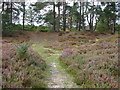 SU8450 : Path through the heather by Alan Hunt