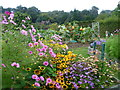 TQ4551 : Flowers and vegetables in the walled garden at Chartwell : Week 36