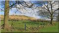 SE0108 : Harrop Cote. by Michael Fox