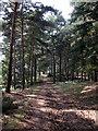 TL1240 : Track through Rowney warren Woods by Philip Jeffrey