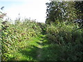 SP8514 : Grassy towpath of Aylesbury Arm canal by David Hawgood