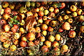 SP1658 : Crab apples by Stratford-Upon-Avon Canal by Oast House Archive