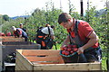 SO6725 : Apple picking at Sargent's farm in September 2014 : Week 38