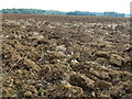 TF1101 : Recently ploughed field near Castor Hanglands Nature Reserve by Richard Humphrey