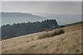 SJ9769 : Plantation on the Slope of Shutlingsloe by Mick Garratt
