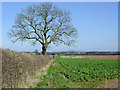 SO7497 : Footpath, field and oak tree north of Worfield, Shropshire by Roger  Kidd