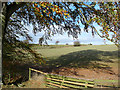 NT5527 : Beech tree and field near Cavers Carre : Week 42