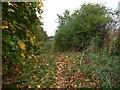 TL0928 : Autumn leaves on the bridleway near Barton Hill Farm by Christine Johnstone