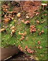 ST6376 : Fungi by the Frome by Derek Harper