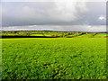 H3082 : Magheracreggan Townland by Kenneth  Allen