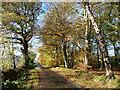 NY4857 : Autumn colours at Corby Lea : Week 44