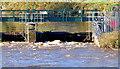 J3470 : The Stranmillis weir, Belfast (November 2014) by Albert Bridge
