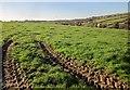 SX3869 : Cattle above the Mill Leat by Derek Harper