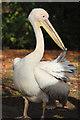 TQ2979 : Pelican, St James Park by Oast House Archive