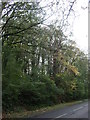SX3754 : Woodland beside the A374 by JThomas