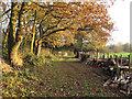 TQ8188 : Boundary of Starvelarks Wood, Daws Heath : Week 48