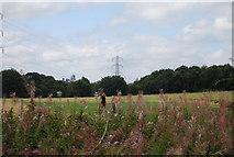 SE3057 : Pylons by N Chadwick