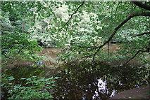 SE3158 : River Nidd by N Chadwick