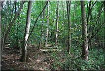 SE3258 : Woodland in the Nidd Gorge by N Chadwick