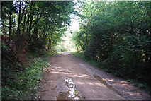 SE3357 : Forest track by N Chadwick