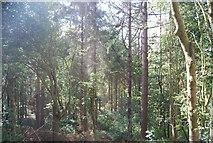SE3257 : Woodland in the Nidd Gorge by N Chadwick