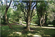 SE3357 : Trees, Nidd Gorge by N Chadwick