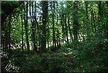 SE3357 : Woodland, Nidd Gorge by N Chadwick