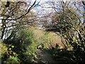 SX2870 : Goodman's Lane, Pensilva by Derek Harper