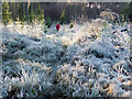 NH6354 : Walking a frozen footpath in the open segment of Shantullich Wood : Week 52
