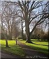 ST5775 : Path, Westbury Park by Derek Harper