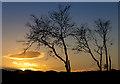 NT1095 : Dusk in Blairadam Forest : Week 3