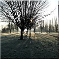 SK5034 : A frosty morning in Manor Farm Park : Week 3