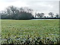 SJ4861 : Farmland south of Long Lane by Christine Johnstone
