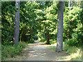 TQ0182 : Public bridleway, Black Park by Robin Webster