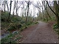 SX8863 : Path in the valley of Hollicombe Lake by David Smith