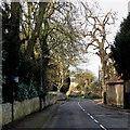TL5458 : Little Wilbraham: Church Road by John Sutton