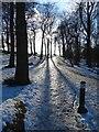 SK3582 : Icy path in Graves Park, Sheffield : Week 5