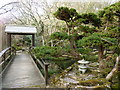 SW8766 : In the Japanese Garden, St Mawgan by Ruth Sharville